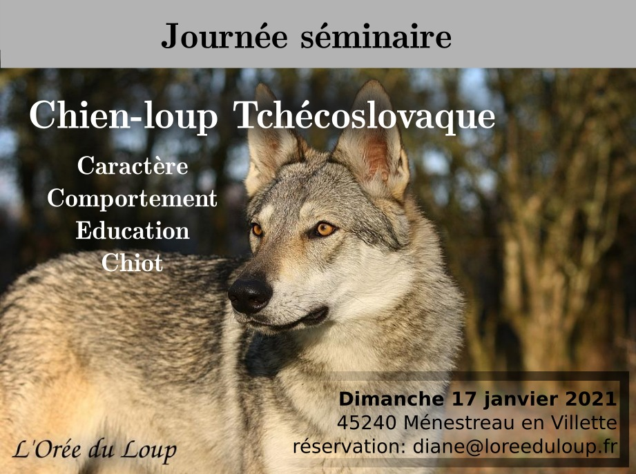 formation-chien-loup-tchécoslovaque