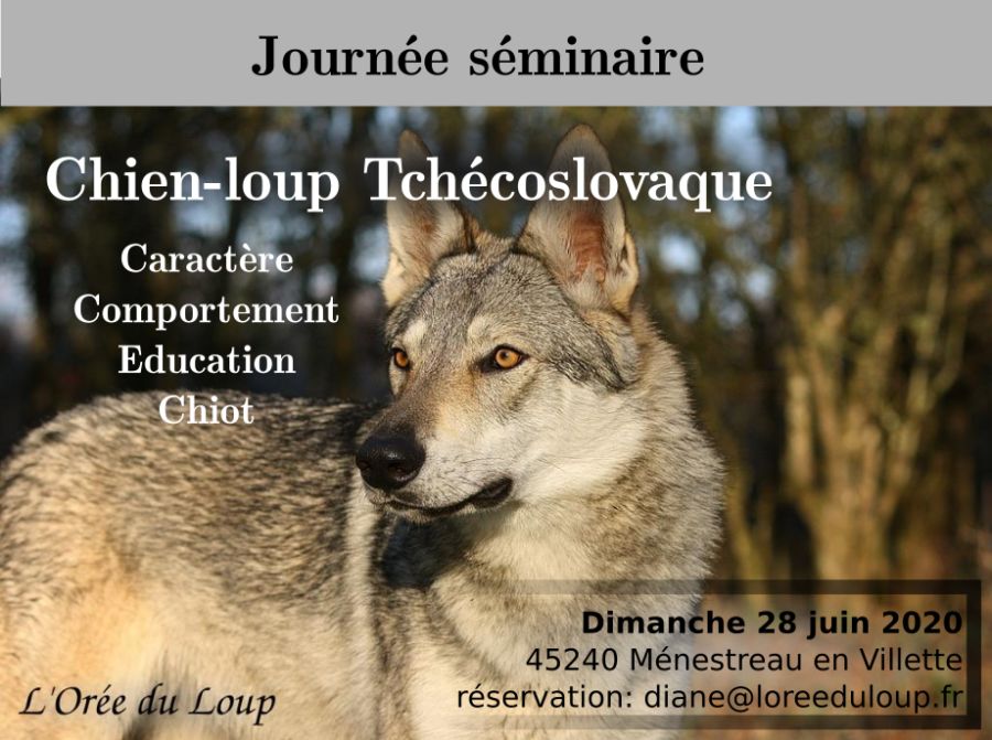 formation-chien-loup