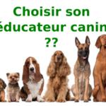 choisir-educateur-canin