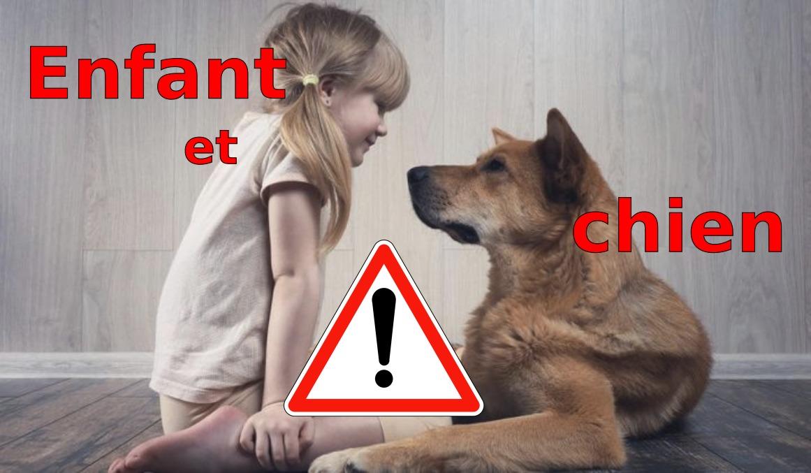 morsure-chien-enfant_loree-du-loup